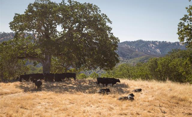 carmel-valley_06